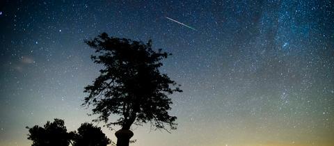 Nachthimmel mit Sternschnuppe und Milchstraße. Gegen den Hintergrund hebt sich die Silhouette einer Wiese mit Baum ab.