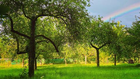 Streuobstwiese mit Regenbogen