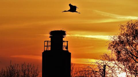 Storch Sonnenuntergang