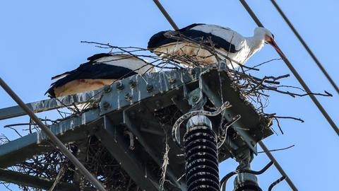 Storch auf Strommast