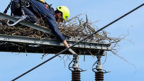 Arbeiter am Storchennest auf einem Strommast