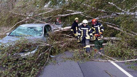 Ein Baum ist auf ein Auto gestürzt.