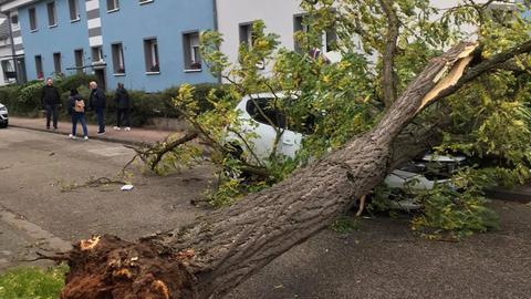 """Sturm """"Ignatz"""" hat einen Baum in Frankfurt Kuhwald auf ein Auto stürzen lassen."""