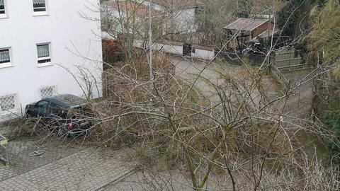 "Umgestürzter Baum in Lauterbach wegen Sturm ""Sabine"""