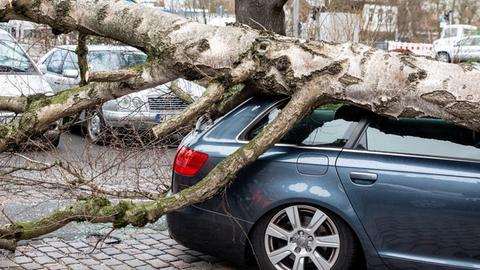 In Wiesbaden-Biebrich wurden Autos durch umgestürzte Bäume beschädigt.