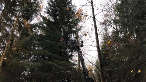 Tannenbaum im Wald