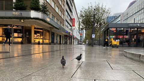 Tauben auf Zeil