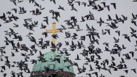 Ein Schwarm Tauben vor der Frankfurter Paulskirche