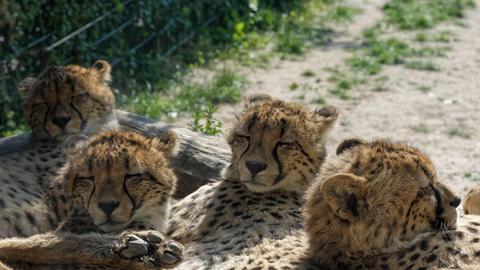 Neue Tierbabys im Opel Zoo