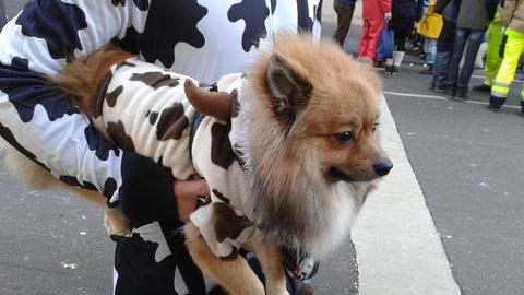 Kostümierter Hund