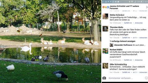 Tierpark Hattersheim mit Ziegen, Enten und Schwänen an einem Teich