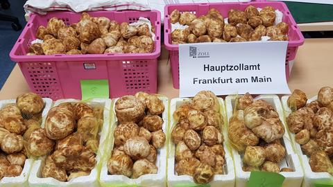Trüffel beim Hauptzollamt Frankfurt