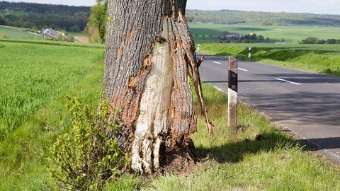 Beschädigter Baumstamm