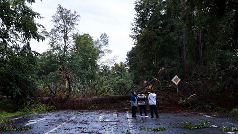 Umgestürzter Baum auf der B486 bei Langen (Kreis Offenbach)