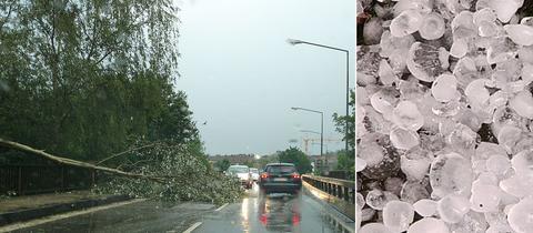 Ein umgekippter Baum auf einer Straße und dicke Hagelkörner