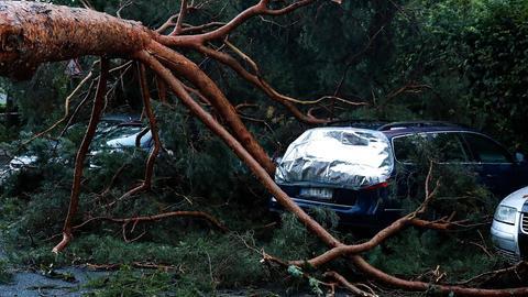 Umgestürzte Bäume in Langen