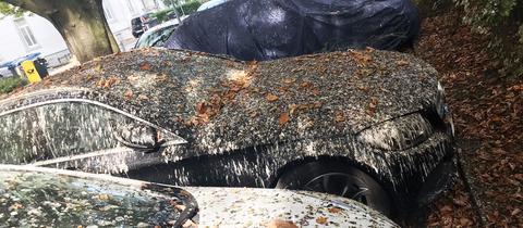 Vogeldreck bedeckt ein Auto in Wiesbaden