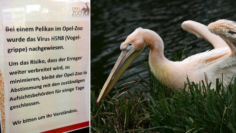 vogelgrippe-opelzoo-kombo