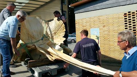 Das Wal-Skelett der Uni Gießen zieht um