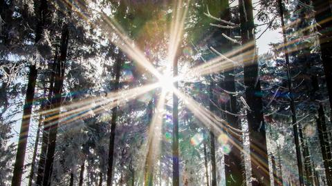 Sonne scheint durch Baumkronen im Wald