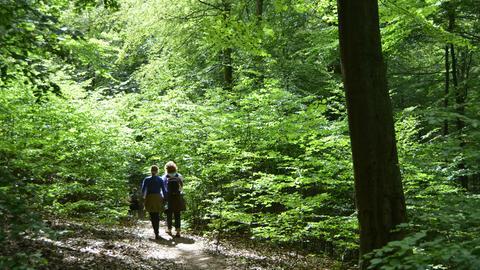 Frauen wandern auf dem Urwaldsteig im Nationalpark Kellerwald