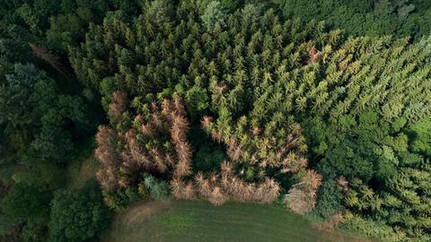 Waldschäden