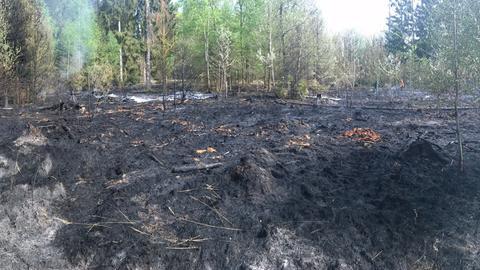 Das Feuer hinterlässt im Bergwerkswald eine große Lücke.