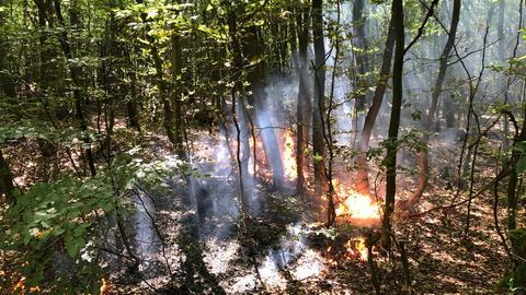 Waldbrand bei Langenselbold