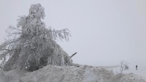 Schneebedeckte Landschaft mit Baum