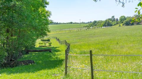Weide mit Zaun