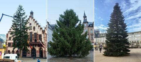 Weihnachtsbäume in Frankfurt, Marburg und Kassel