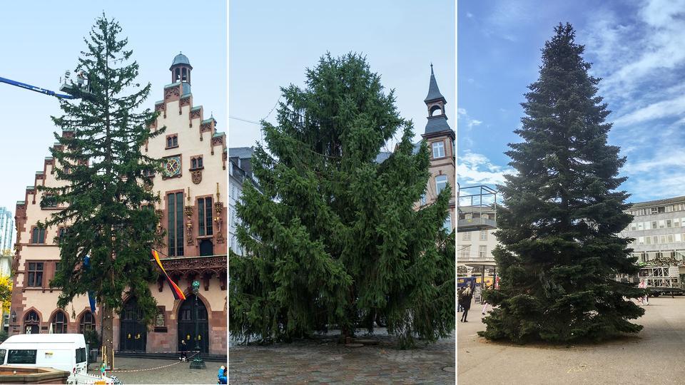 weihnachtsbaum check wer ist der sch nste im ganzen land. Black Bedroom Furniture Sets. Home Design Ideas
