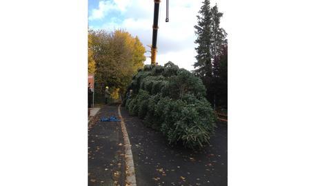 Weihnachtsbaum für Kassel