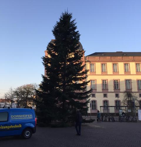 Ein Darmstädter Baum vor dem Darmstädter Residenzschloss