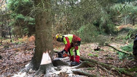 Ein Arbeiter fällt den Baum.