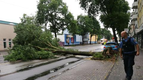 Baum Weserstraße Kassel