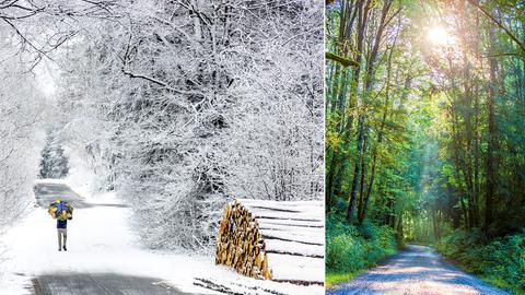 Das linke Bild zeigt schneebedeckte Bäume auf dem Feldberg, rechts scheint die Sonne sommerlich auf den Wald.
