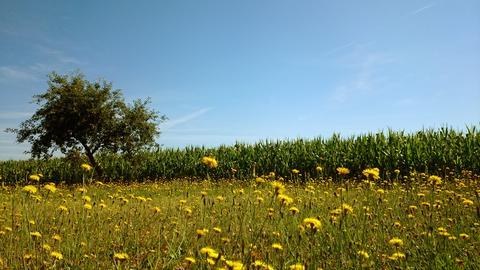 """""""So wunderschön startet der Morgen in der Schwalm"""", schreibt Kornelia Montanus aus Schwalmstadt-Niedergrenzebach zu ihrem Wetterfoto."""