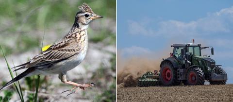 Bildkombo: Feldlerche, Traktor