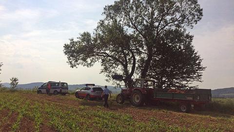 Getötete Rinder auf Traktor-Anhänger bei Herleshausen