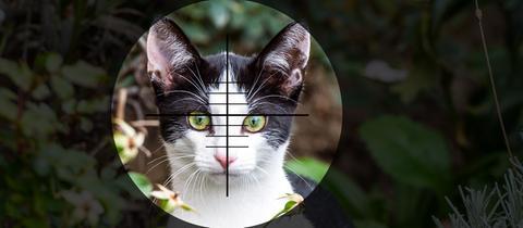 Katze im Gewehr-Visir