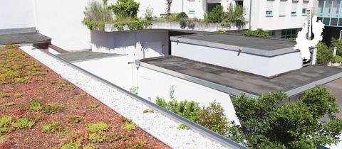 Begrüntes Flachdach in einem Hinterhof in Darmstadt