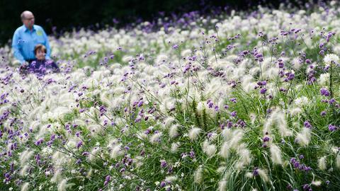 Blühendes Blumenbeet bei der Landesgartenschau Gießen 2014