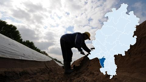 Spargelfeld bei Büttelborn. Im südlichem Teil des Wahlkreises Groß-Gerau spielt der Spargelanbau ein wichtige Rolle.