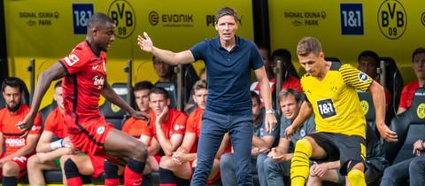 Oliver Glasner beim Spiel der Eintracht in Dortmund.