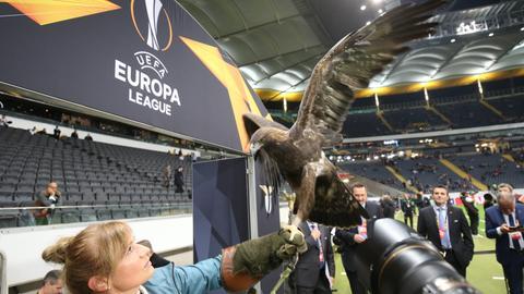 Der Eintracht-Adler Attila