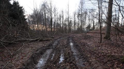 Schwere Maschinen schädigen Waldböden in Seeheim-Jugenheim.