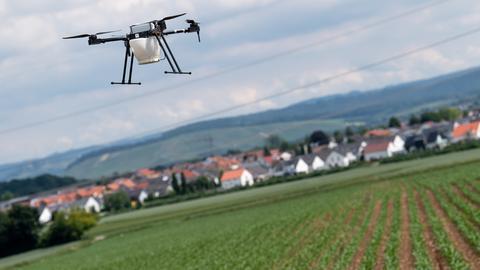 Smart Farming: Mit einer Drohne gegen Schädlinge wie den Maiszünsler bekämpfen