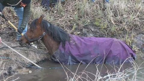 Feuerwehr rettet feststeckendes Pferd aus Bach