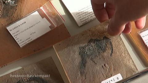 hsk fossilien